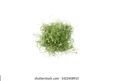 Pile of dried natural herbal remedy called Equisetum arvense the field horsetail or common horsetail isolated on white.