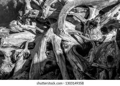 A pile of driftwood along the Washington coast