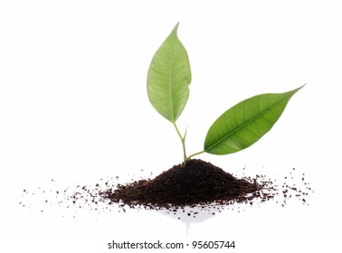 Pile of dry tea leaves over white background