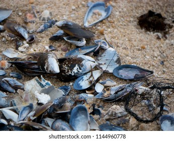 A pile of empty mussel and limpet shells, along with other seashells and a piece of discarded fishing net, lying on a sandy beach.