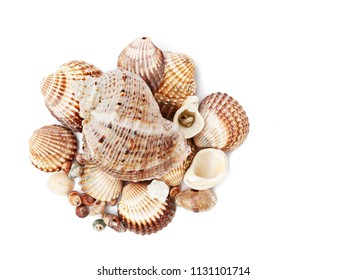 Pile of empty seashells isolated on white background