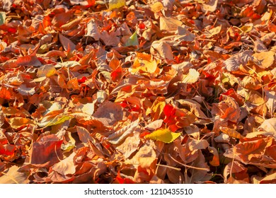 Pile of fall leaves