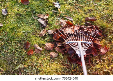 Pile of fall leaves with fan rake on lawn, Garden work in autumn, Gathering Colorful Fall Leaves Background, texture, outdoor