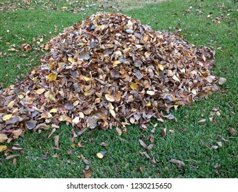 Pile of fall leaves in green grass