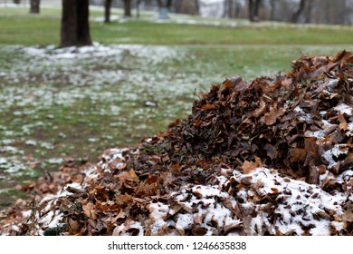 A pile of fallen faded dry autumn leaves under snow