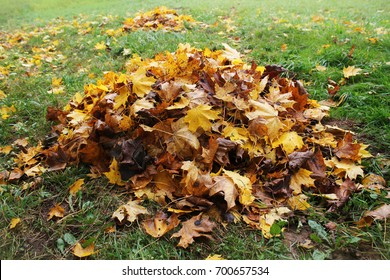 Pile of fallen leaves in autumn park. Fall background