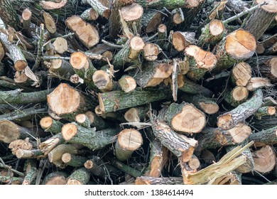 A pile of felled trees ready to be used as fuel for the fireplace. Trees are also felled for use for bio fuel. Besides the trunks, thinner branches are also visible