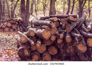 a pile of firewood in the forest