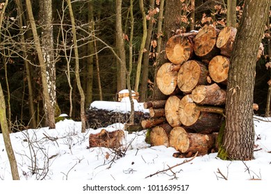 Pile of firewood in a snowy forest. Pine trunk for firewood. Eco-friendly wood heating