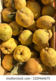 A pile of a fresh and delicious quinces in the wooden box