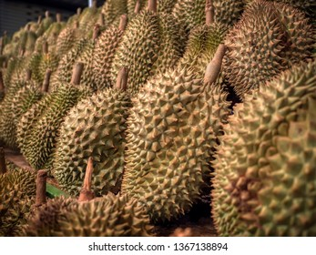 The pile of fresh durians in the durian market.
