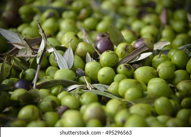 Pile of fresh mature green Sicilian olives from Italy ready to be pressed for tasty olives oil. Photo taken in one of Olives Mill in Sicily.