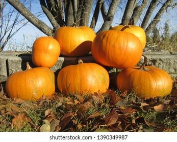 a pile of fresh pumpkins