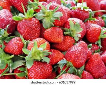 Pile of fresh strawberries.