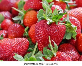 Pile of fresh strawberries closeup