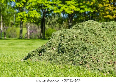 pile of freshly cut grass in park
