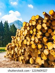 Pile of freshly cut logs near Sella Nevea, Giulian Alps, Friuli, Italy