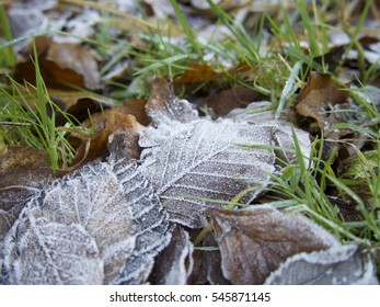 Pile of frost covered leaves with grass protruding between