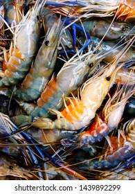Pile of giant freshwater prawns has eggs, pregnant  prawns eggs, fresh shrimp has eggs.