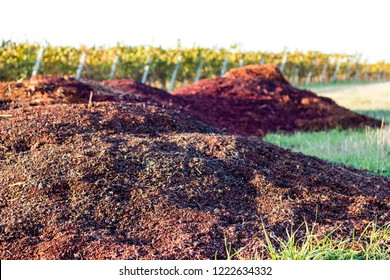 Pile of grape pulp as leftovers of the grapes within the wineyard. Waste product of the wine making process. Selective focus