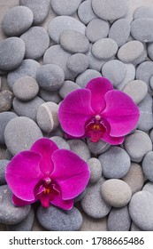pile of gray Stones and two red orchid ,closeup