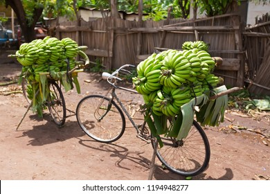 Pile of green African bananas stacking on bicycle at fresh market in Mto wa Mbu village, Arusha Region, Tanzania. Environmental-friendly way to transport bananas.