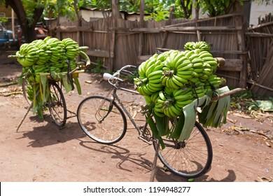 Pile of green African bananas stacking on bicycle at fresh market in Mto wa Mbu village, Arusha Region, Tanzania. Environmental-friendly way to transport bananas.