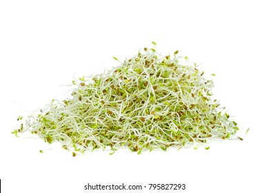 Pile of green alfalfa sprouts isolated on white background
