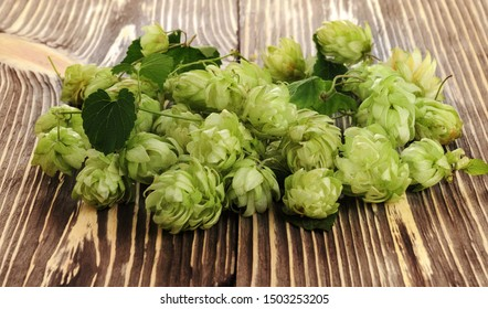 Pile of green fresh-picked hop cones on wooden table. Ingredient for beer production (brewing).