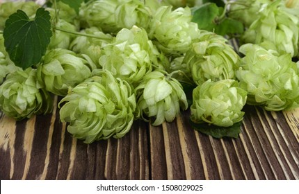 Pile of green fresh-picked hop cones on wooden table. Close up. Ingredient for beer production (brewing).