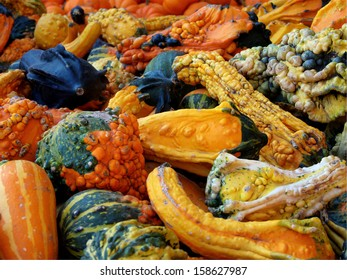 Pile of Halloween gourds, squash and pumpkins