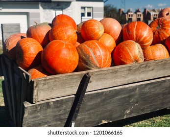 A pile of harvested orange pumpkins on a wooden wagon in the countryside.