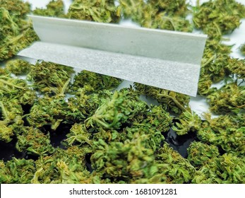 Pile of homegrown, recreational marijuana and a white rolling paper. Closeup of dried indica cannabis flower.