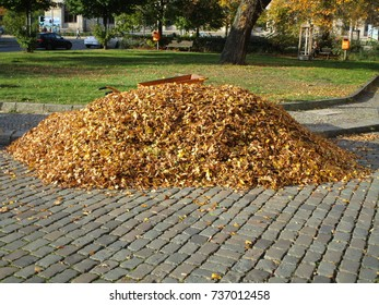 pile of leaves,colored leaves
