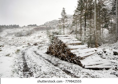 Pile of logs in Beddgelert Forest. Snowdonia National Park in North Wales, United Kingdom.