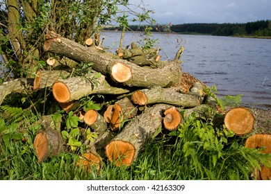 A pile of logs created by forestry management during tree pruning