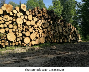Pile of logs. Cut down trees. Deforestation