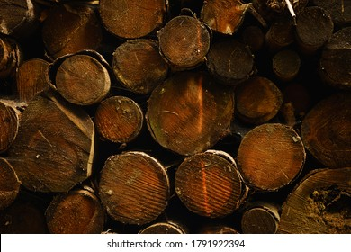 Pile of logs in the forest, beautiful detail, bark beetle