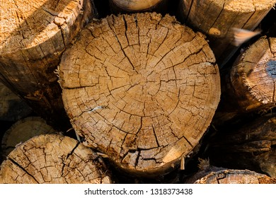 A pile of logs prepared and stored in bulk. The cut texture is the cracked wood. Close up.