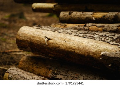 Pile of logs without bark after bark beetle calamity, Czech Republic