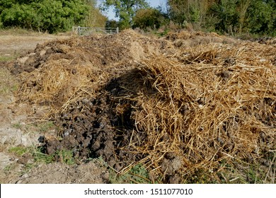 A pile of manure and straw in a farmyard