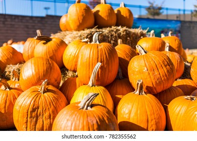 Pile of many large orange pumpkins with hay harvest in autumn or fall season