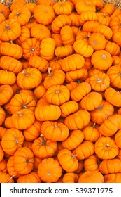 Pile of miniature pumpkins for sale at an open air farmers market for Oktoberfest