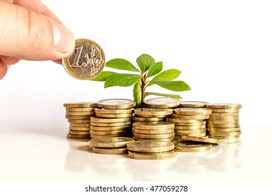 Pile of money (Euro ) isolated on white background under tree or plant with hand