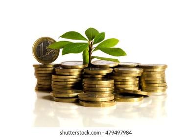 Pile of money (Euro ) isolated on white background under tree or plant