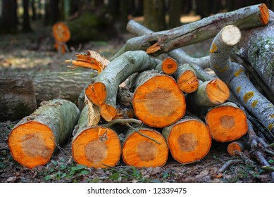 pile of orange aspen logs in the spring wood in the sunset