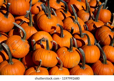 Pile of orange carving pumpkins at a fall festival