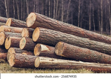 Pile of pine logs on meadow in forest