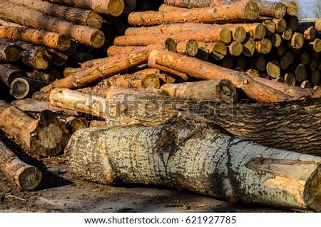 Pile Pine Logs Yard Sawmill Stock Photo (Edit Now) 621927785