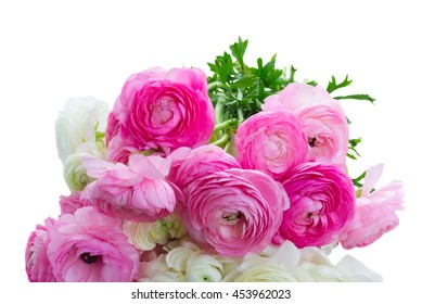 Pile of pink and white ranunculus fresh flowers close up isolated on white background